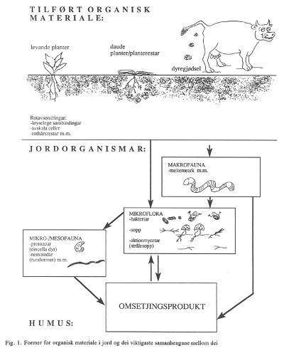 Figur 1: Former for organisk materiale i jord og dei viktigaste samanhengane mellom dei. Foto: Bibbi Thorbjørnsen