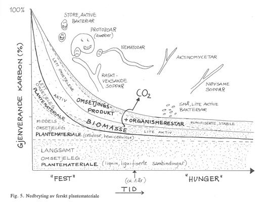 Figur 5: Nedbrytning av ferskt plantemateriale. Foto: Bibbi Thorbjørnsen
