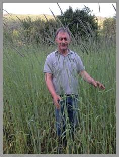 Lie Svalheim har drevet gården siden 1987 og la om til økologisk i 2001. Gården har vært i familien i generasjoner, og sønnen Jostein Svalheim er også involvert i drifta i sesongen. De planlegger å starte gårdsmalteri i 2017. . Foto: Privat