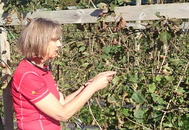 Sigrid Mogan er fagkoordinator for frukt og bær i Norsk Landbruksrådgiving. Ho samarbeider med føregangsfylke frukt og bær, og har arbeidd mykje med tilgang på plantevernmiddel til økologisk bruk. Foto: Frøydis Linden / FMHO
