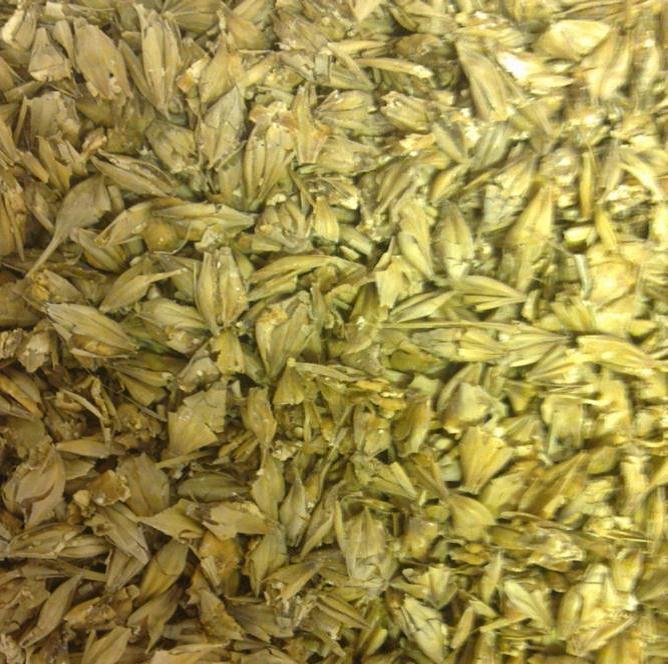Det er viktig at kornet knuses slik at kjernen kommer fram for å få ensilert kornet. Foto: Rune Granås