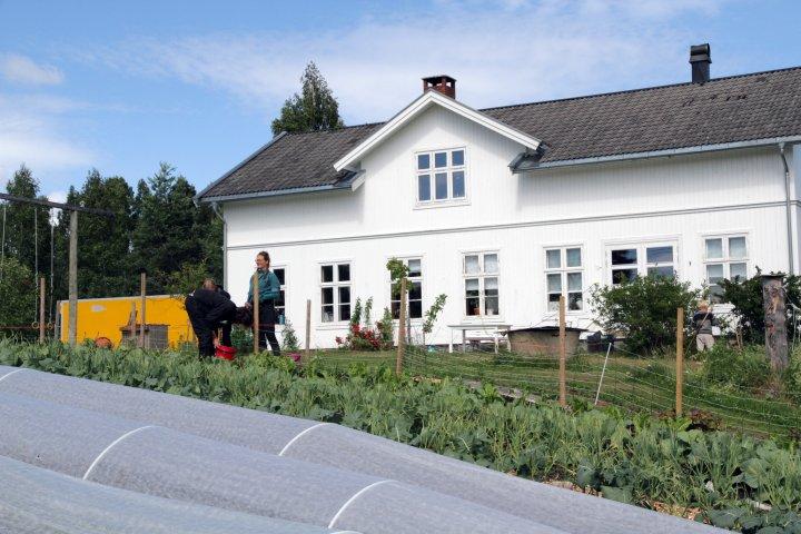 Drifta på Toreshaugen omfatter også dyrking av grønnsaker og urter. Om sommeren er det flere som hjelper til med stell av små og store planter. Foto: Anita Land