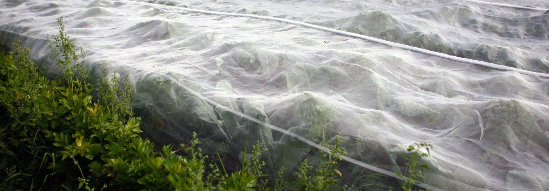 Skal vi bruke duk eller nett er det en forutsetning at skadegjørere ikke allerede er i åkeren når duken eller nettet legges på. Foto: Leif Arne Holme