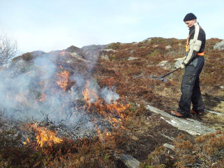Brannsmekke i metall er anbefalt redskap ved lyngbrenning. Her er det Ingbjørn Bredeli fra Forum for natur og friluftsliv som passer ilden på Småge i Møre og Romsdal. Foto: Maud Grøtta