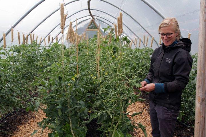 Tomater er også en del av sortimentet. Foto: Anita Land