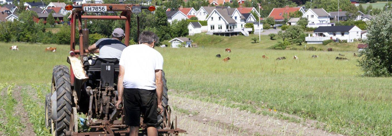 Asbjørn Lavoll og Ranjit Singh på traktoren radrenser grønnsakene til andelshaverne. Foto: Anita Land