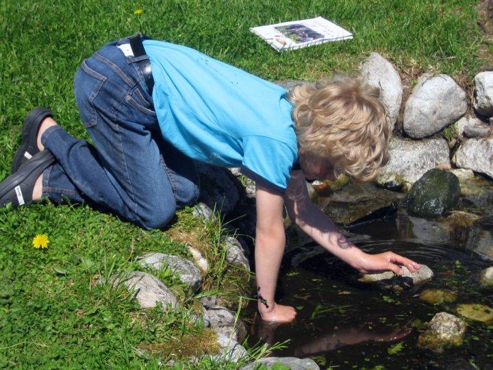 Froskedammen i skolehagen er en viktig del av hagens økosystem. En elev har valgt denne som sin spesielle flekk som han skal følge gjennom sesongen. Observasjoner og betraktninger tegnes og beskrives i loggboken. Foto: Kirsty McKinnon