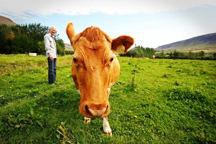 IKKE BARE DYR OG BEITE: Menneskene som jobber på gården er også en viktig ressurs som børe tas med i kartleggingen. Foto: Håkon Fossmark på Pixabay