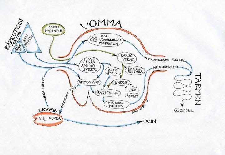 Protein I Vom Sign Anne De Boer 002