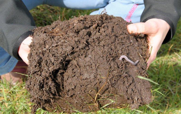 God biologisk aktivitet i jorda danner grunnlaget for god jordstruktur. Foto: Anita Land