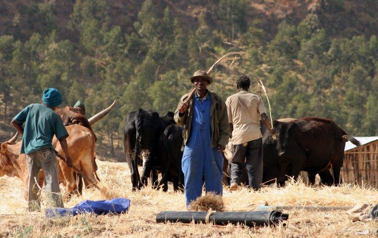 Erfaringene viser at avlingene øker med frøbanker, og at det lokale biologiske mangfoldet i landbruket tas vare på på denne måten. Foto: Anita Land