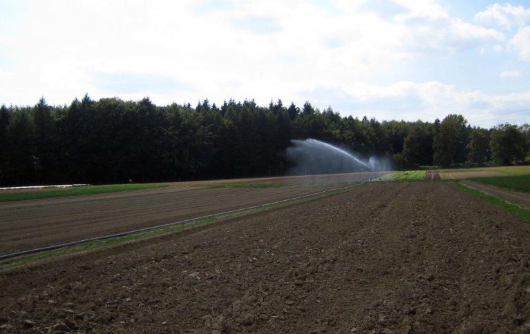 Det falske såbeddet vannes, harves, vannes harves før såing. . Foto: Kirsty McKinnon