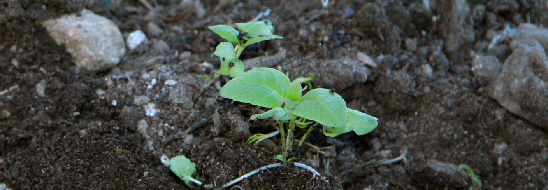 Img 9016 Al Plant