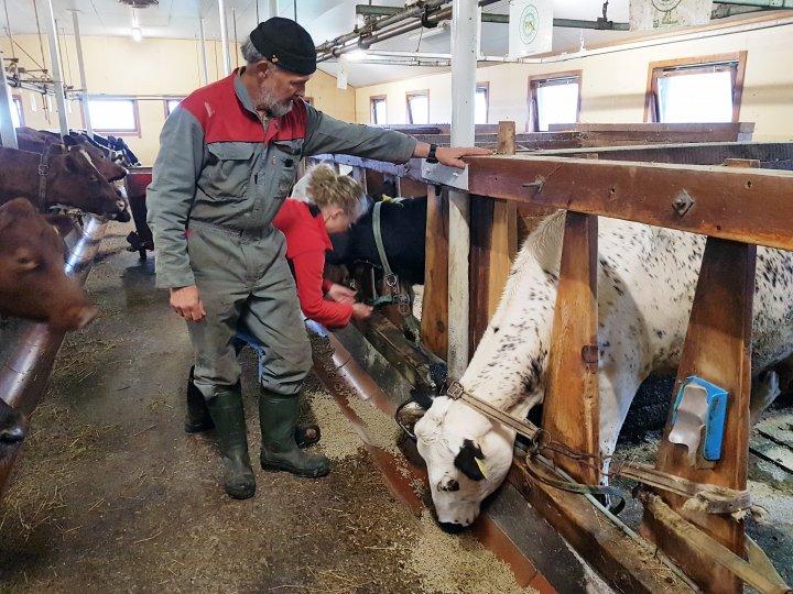 Hans Erik viser fram fjøsinnredningen som har holdt stand siden fjøset ble bygget i 1983, mens Ragnhild får arbeidet unna. Foto: Maud Grøtta