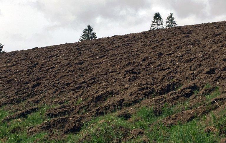 Lystgass utgjør en viktig del av klimagassutslippene fra landbruket. Foto: Anita Land