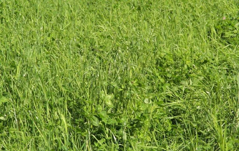 Gras Img 7851