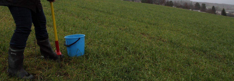 Maud Grøtta fra Norsk Landbruksrådgiving tar jordprøver på enga på Tingvoll gard. Foto: Anita Land