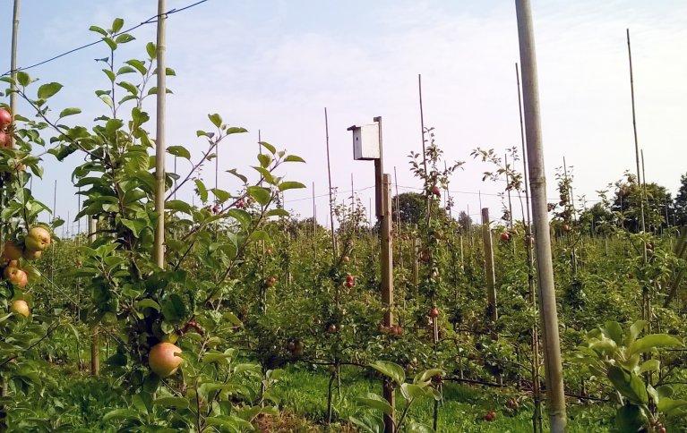 Fugler trives godt med bolig i matfatet. Vi kan legge tilrette for nyttedyr med insektshotell og fuglekasser. Foto: Grete Lene Serikstad