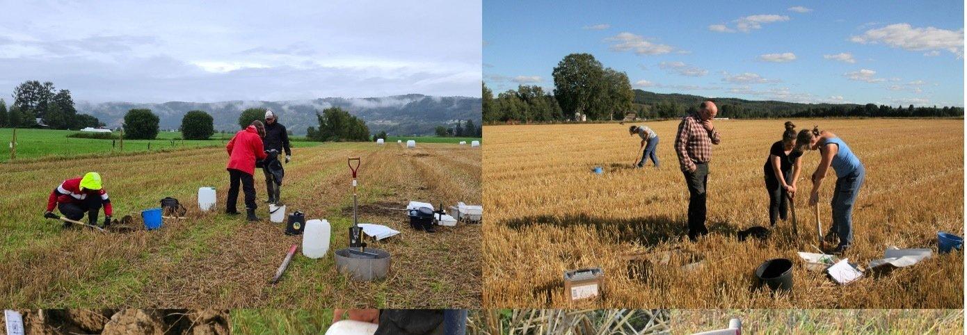KARBONLAGRING I JORDBRUKSJORD: Mer mold i jorda betyr økt karbonlagring. Dette gir også bedre jordkvalitet til bondens beste.  . Foto: Vegard Botterli