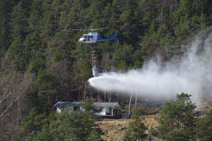 Helikopteret sprer ut ca 700 kg i hver vending, med stor presisjon. Foto: Ingrid  Gauslaa