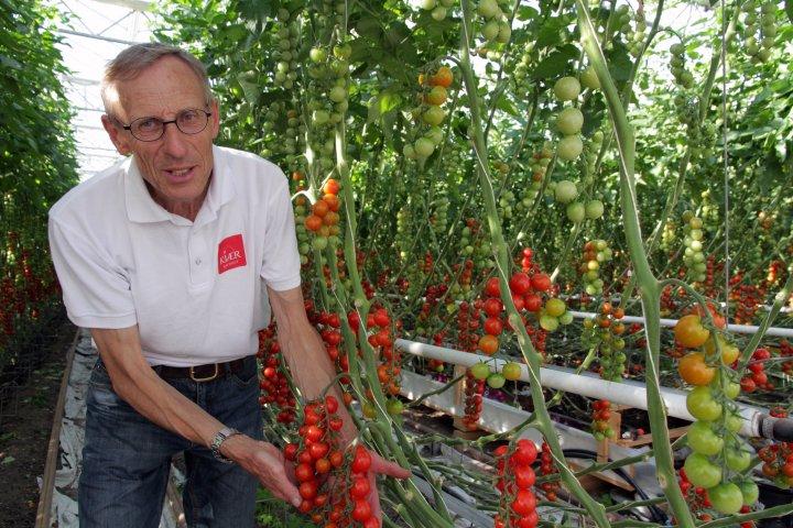 Martin Danielsen har vokst opp med grønnsaksdyrking. Nå forsyner han nordmenn med smakfulle økologiske tomater og agurker. Foto: Anita Land