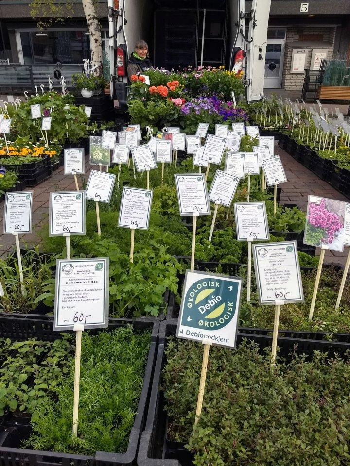 Det er lett for bevisste forbrukere å finne de økologiske plantene på Stortorget i Tromsø. Foto: Liv Solemdal