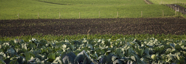 MINERALER: Steinmel er et mineralrikt jordforbedringsmiddel som egner seg godt i økologisk dyrkning. Foto: DEBIO
