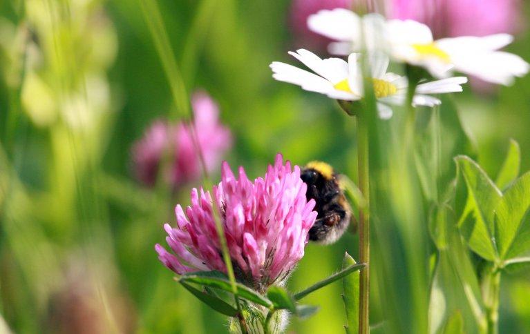 Hva skjer av kommunikasjon i ei blomstereng kan man spekulere på. Foto: Anita Land