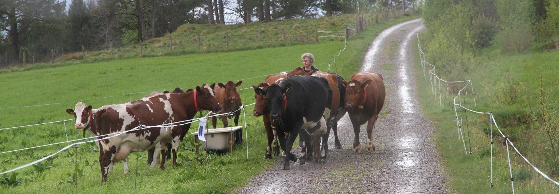 Hva er best for miljøet økologisk eller konvensjonelt landbruk.