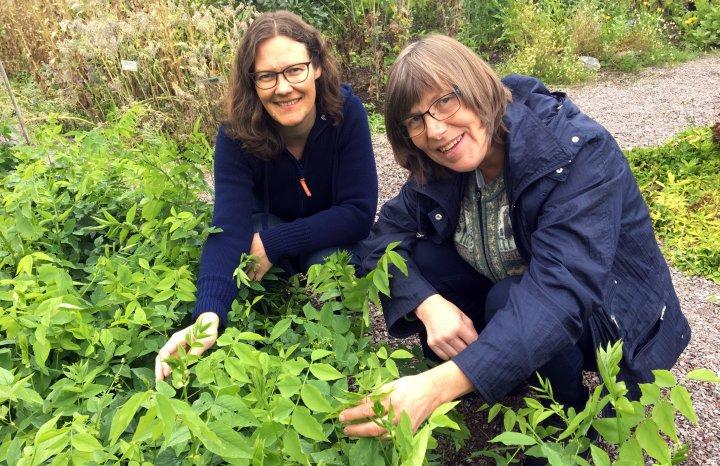 Forskerene Randi  Berland Frøseth og Sissel Hansen har sett på hvordan en kan bedre jordfruktbarheten i økologisk jordbruk og samtidig redusere tap av nitrogen til miljøet.