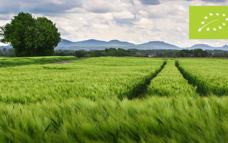AMBISIØST: Den nye handlingsplanen for økologisk landbruk i EU er mer ambisiøs enn noensinne. Foto: Thomas B. fra Pixabay