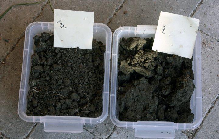 Det er et faktum at eng har meget positiv effekt på jordkvaliteten. Boksen til høyre er fra jord hvor det har vært korn flere år på rad. Boksen til venstre -  er fra ruta hvor det er 2.års eng. Fra et demonstrasjonsfelt med jordløsning og ulike vekster. Foto: Kari Bysveen