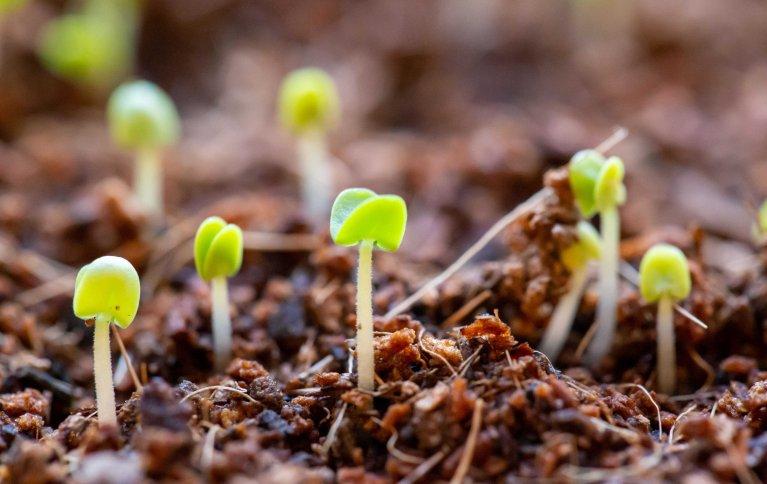 BIOSTIMULANTER: FiBL, Forskningsinstituttet for økologisk landbruk i Sveits har utgitt et faktahefte om såkalte biostimulanter eller planteforsterkere. Foto: pxfuel
