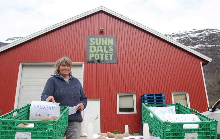 MER ØKOLOGISK POTET: Seniorforsker Anne-Kristin Løes med et utvalg av tidligsortene som ble testet i samarbeid med Sunndalspotet AS. Foto: Vegard Botterli