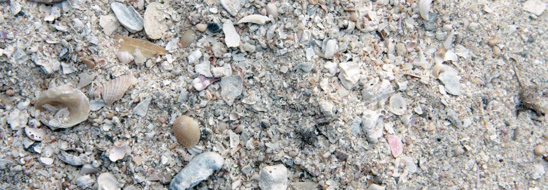 De viktigste kalkingsmidlene er kalkstein, dolomitt og skjellsand (bildet) i økologisk landbruk. Foto: Anita Land