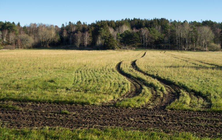 Store landbruksmaskiner kan sette dype spor på dyrket mark. Faste kjørespor er et godt virkemiddel for å berge røtter og nitrogenopptak i jorda. Foto: Public domain