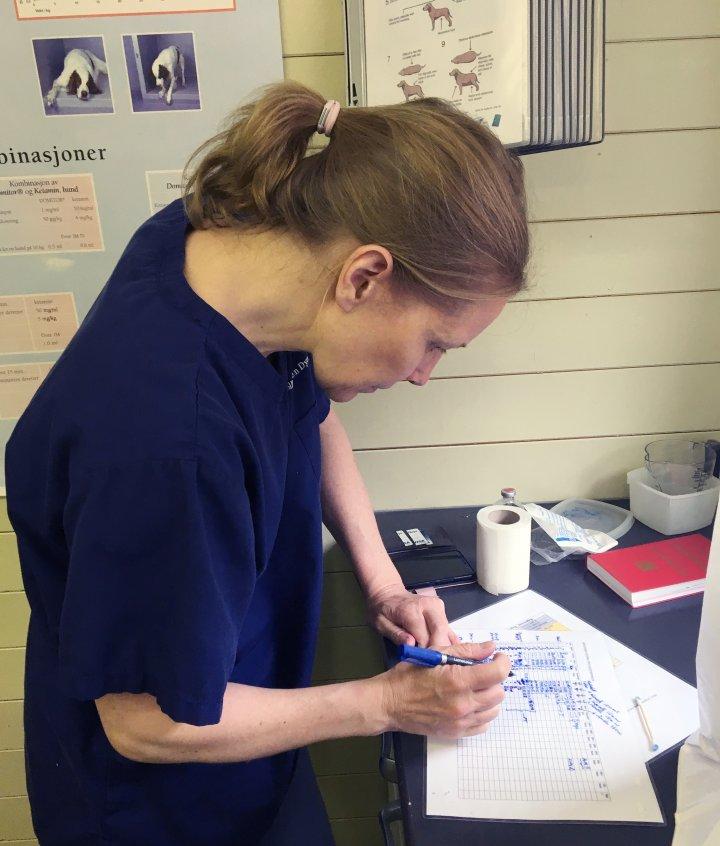 Berit Blomstrand, veterinær og forsker ved NORSØK, tar en doktorgrad på hvordan barkekstrakt virker mot parasitter. Foto: Anita Land