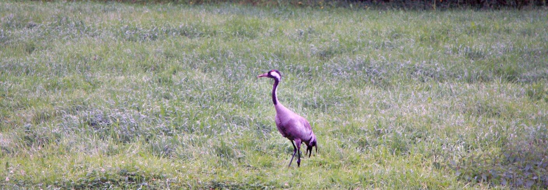 """Fugler gir et godt bilde på naturens """"helsetilstand"""". Mange arter er knyttet til jordbrukslandskapet. . Foto: Anita Land"""