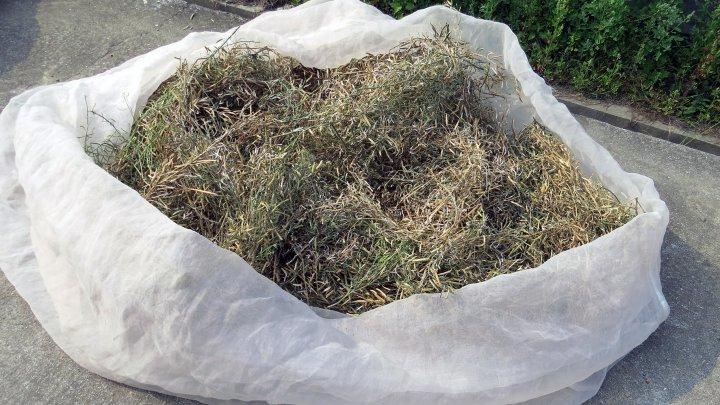 Brassica Pods Harvested