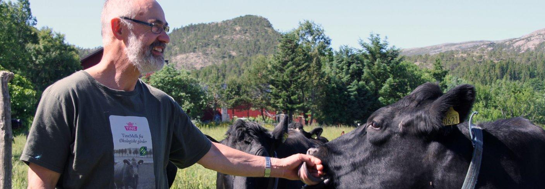 Otto har god kontakt med kyrne, og sørger for oppfølging av hver enkelt. Foto: Eva Pauline Hedregart