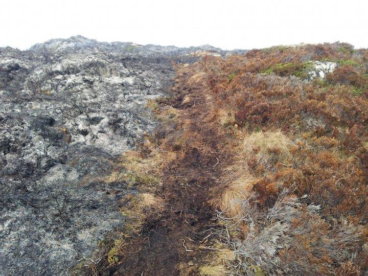En sti kan være ei grense der en motvindsbrann kan stoppes, helst i kombinasjon med ei branngate. I dette tilfellet ble brannen startet langs stien. Foto: Maud Grøtta