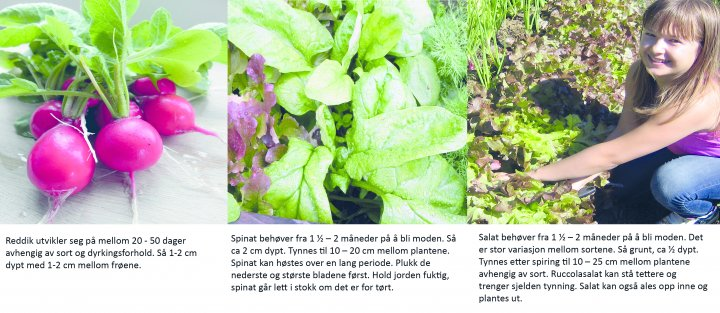 Ill 3Reddiker Salat Og Spinat