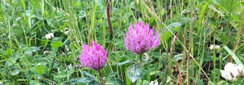 Hvordan kantarealene behandles er viktig for at de skal være boplass og matfat for pollinerende insekter. Foto: Anita Land