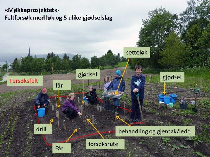 Mange nye begreper og ord for unge forskerspirer . Foto:  Reidun Pommeresche