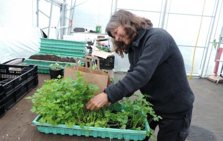 Eva Skulgam har bygd opp gartneriet sammen med Tor. . Foto: Kirsty McKinnon