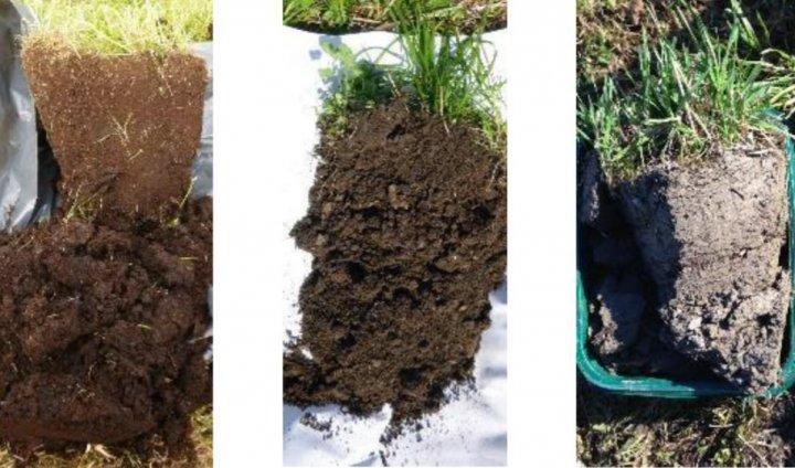 Fra venstre mot høyre tre eksempler på jord i Norge, med avtagende mengde organisk materiale; myrjord, morenejord og leirholdig jord. Det er det totale økosystemet på jordet som bestemmer mengden karbon i jorda, slik at både hva som produseres, hvordan, hvor mye som høstes og tilføres, i tillegg til jordsmonn, jordbiologi og miljøforhold bidrar inn i karbonregnskapet. Dette gjør det svært komplisert. Foto:  Reidun Pommeresche