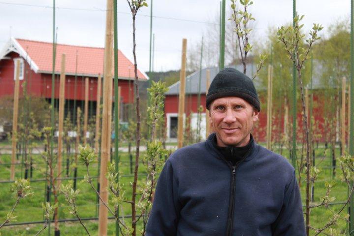 Røste ønsker å legge om den økologiske epleproduksjonen først. Han veit det er etterspørsel etter denne varen nå, og blir trigga av utfordringene han vet økologisk drift vil gi. Foto: Mikkel Aanderaa / FMHO