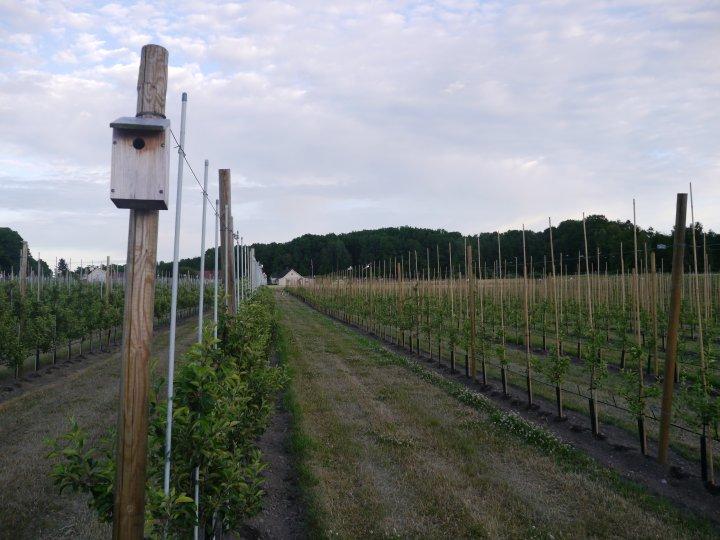 Foruten det nøyaktige håndarbeidet bruker ekteparet mye fugl og bier. Det står mange fuglekasser blant epleradene. Når en tredjedel av epleblomstene er sprunget ut slippes biene fra kubene, to kuber pr. 10 da. Bjerketvedt sverger også til fresing i radene for å få svart jord slik at næringa går i trærne og ikke i ugresset