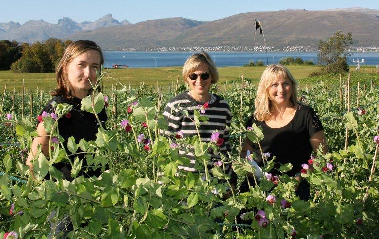e tre NIBIO-forskerne Ewelina Wojciechowska, Inger Martinussen og Ingunn Vågen i ertefeltet på Holt i Tromsø. . Foto: Anne Linn Hykerud