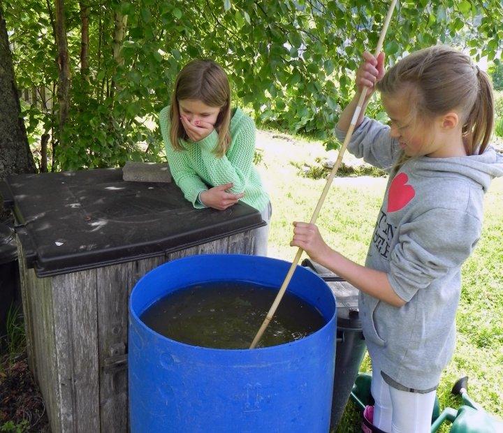 """Omrøring i gjødselvann laget av brennesle og valurt. """"Huff - det lukter vondt!"""". Foto: Kirsty McKinnon"""